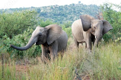 Obraz na plátne Playfull elephant