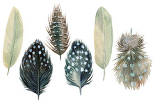 Set Of Feathers On An Isolated...