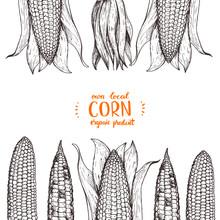 Corn On The Cob Hand Drawn Vector Illustration. Corn Sketch Illustration. Engraving Style, Vintage Design.