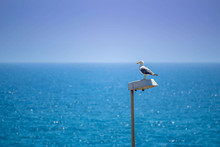 Seagull Watching From The Top ...