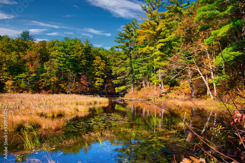 Cuadros en Lienzo Pond at Chenango State Park in Autumn