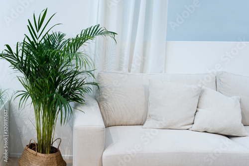 Areca Palme, Zimmerpflanze Canvas Print