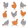 Set of hand drawn speckled hens. Chicken food vector illustration.