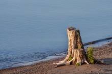 Stump With Grass On Lake Superior Beach