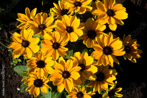Photo Group of bright yellow flowers