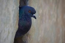 Side Macro View Of Bird