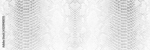 Foto Skin snake background White snake skin texture Close-up