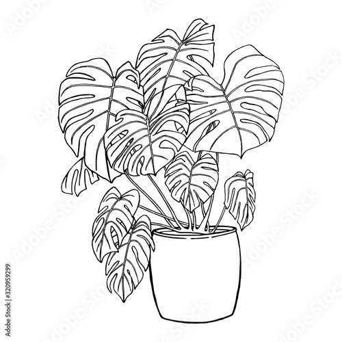 Fototapeta Flower with leaves in a pot. Isolated on white background black outline hand drawn with pen and ink. Tropical plant used in the interior. Design element. obraz na płótnie