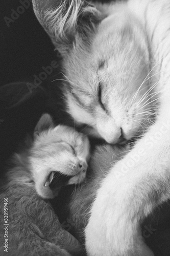 Amor de gatos Canvas Print
