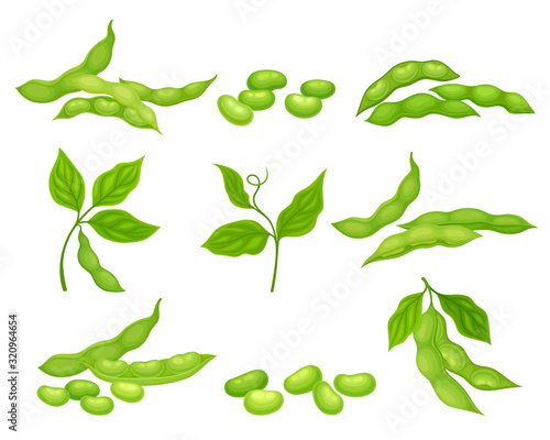 Fototapeta Soy Bean Plant with Ripe Pods and Green Leaves Vector Set obraz