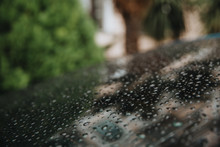 Raindrops On The Hood.