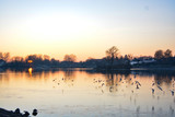 birds flying in the sunset in Schärding, Austria - 320967242