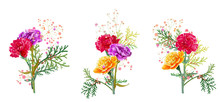 Set Bouquets Of Carnation. Pur...
