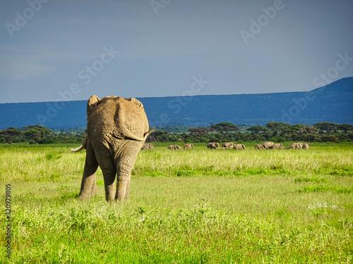 Elefanten im Nationalpark Tsavo Ost und Tsavo West in Kenia Canvas Print
