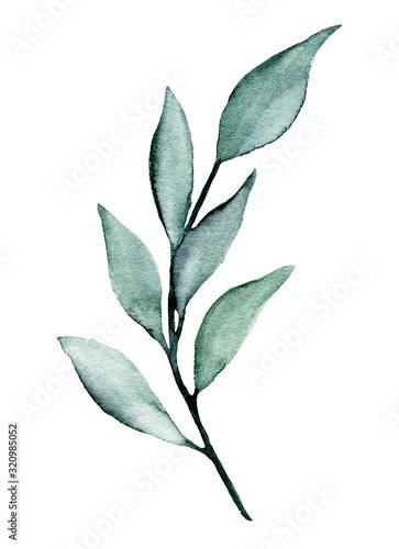 lisc-akwarela-wrecza-malowac-kwiecistych-rysunki-botaniczne-ulistnienie-ilustracja-liscie-odizolowywajacy-na-bialym-tle