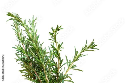 Obraz Fresh rosemary branch isolated on white background - fototapety do salonu