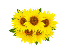 Sunflower Isolated. Group Of Yellow Bright Beautiful Sunflower Flowers Collage Isolated On White Background With Green Leaves