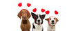 bbanner three group dogs puppy love celebrating valentine's day with a red heart shape diadem. Isolated on white background. Happy expression.