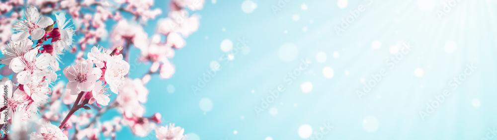 Kwitnących gałęzi moreli z baneru internetowego miejsca kopiowania: koncepcja wiosna czas <span>plik: #321016696 | autor: SerPhoto</span>
