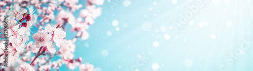 Blossoming apricot tree branches with copy space web banner: spring time concept