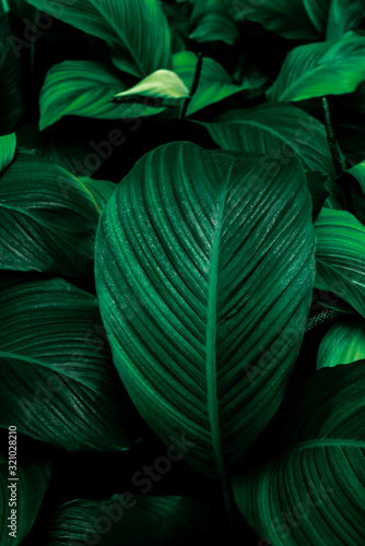 Fototapety, obrazy: abstract background with green leaves