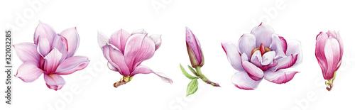 Stampa su Tela Magnolia flower arrangement watercolor painted illustration set