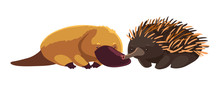 Platypus And Echidna On White ...