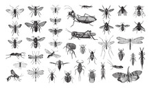 Insects Collection / Vintage I...
