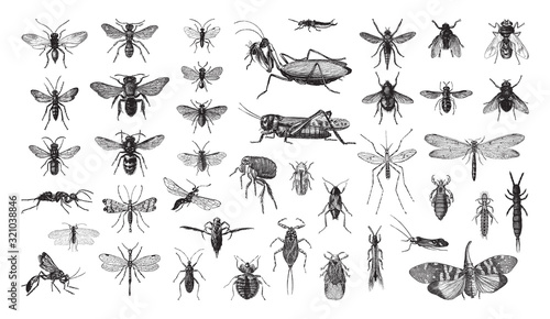 Photographie Insects collection / vintage illustration from Brockhaus Konversations-Lexikon 1