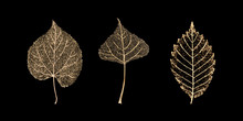 Set Of Gold Skeleton Leaves On...