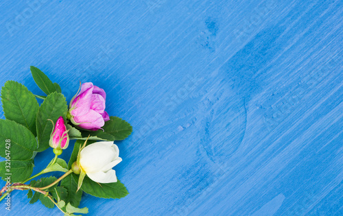 Roses on an blue wooden background. Copy space