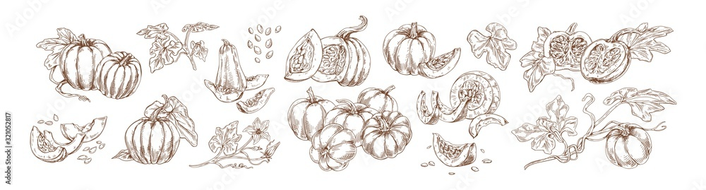 Fototapeta Pumpkin set monochrome drawings vector illustration. Traditional autumn harvest whole, slice and halves hand drawn collection. Agricultural produce various shape detailed sketch isolated on white