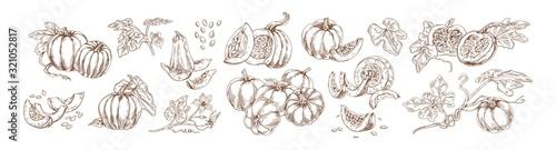 Fotografia Pumpkin set monochrome drawings vector illustration