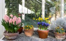 Spring Flowers In Pots In Gree...