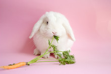White Rabbit With Carrot On A ...