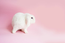White Rabbit With Carrot On A Pink Background. Easter Party. Bunny