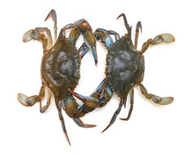 Blue Crabs Isolated On White
