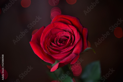 Single Red Rose Against Black Background with Red Bokeh Lights