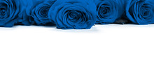 Blue Roses .Color Of The Year 2020 Classic Blue Toned