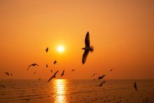 Silhouette Seagulls Bird Are F...