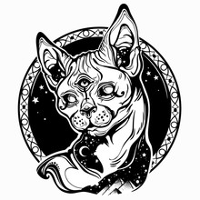 Egyptian Sphynx Cat On The Background Of Stars And Egyptian Pyramids