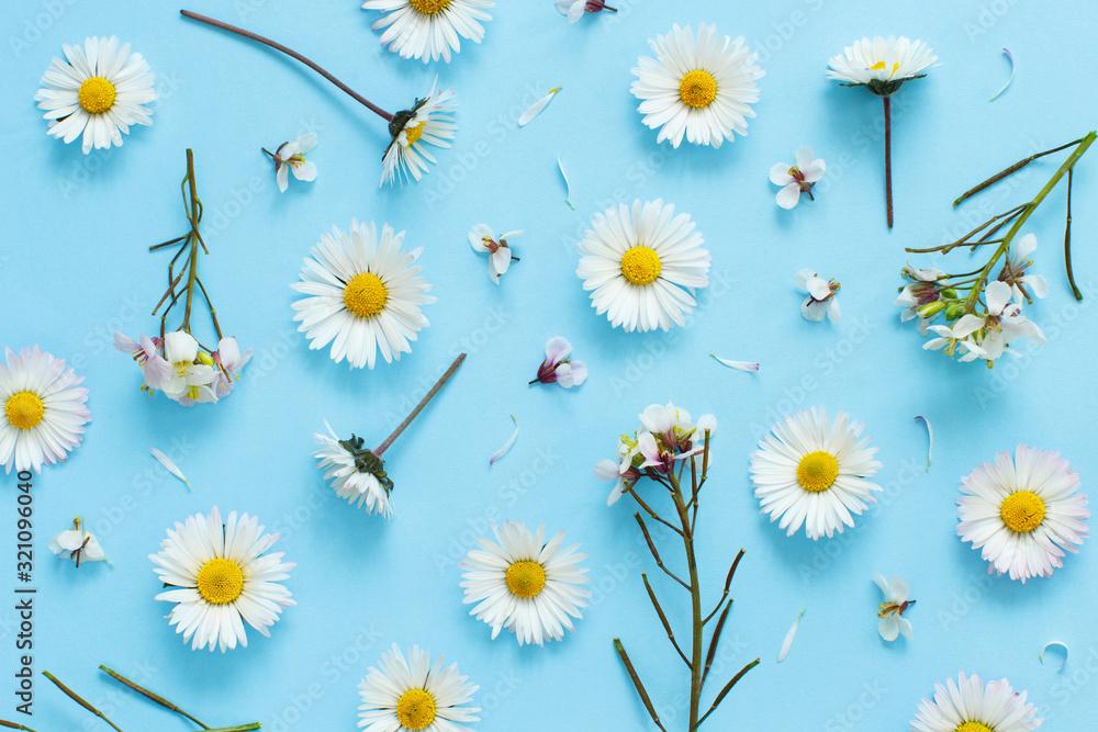 Fototapeta White wild flowers on a light blue background