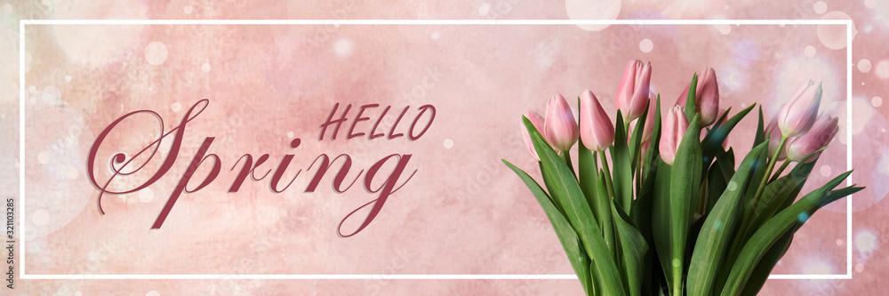 Fototapeta Beautiful tulips on pink background. Hello spring