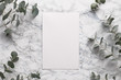 canvas print picture - Beautiful abstract floral background. Flat lay, top view eucalyptus on marble background, flat lay on light textured stone table surface. Minimal concept with text space. Trendy background.