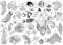 Set Of Underwater Creatures, C...