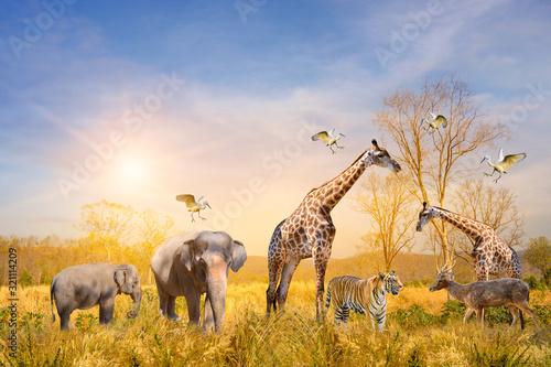 Photo Large group of african safari animals