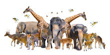 A Group Of Wildlife Such As Deer, Elephants, Giraffes And Other Wild Animals Grouping Together In A White Background.Isolate
