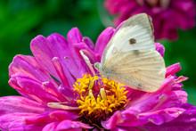 Macro Shot Of A Butterfly On A Summer Flower