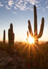 Saguaro National Park - Tucson, Arizona, USA