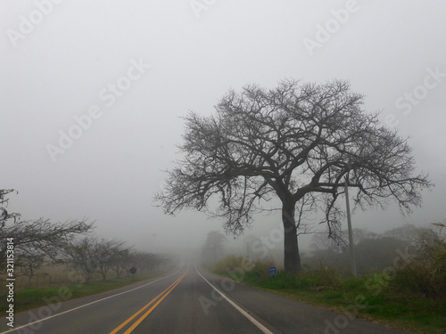 tree in the fog of the road Wallpaper Mural